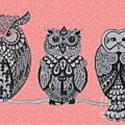 Three Owls On A Branch Pink Poster