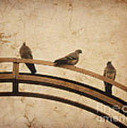 Three Pigeons Perched On A Metallic Arch. Poster