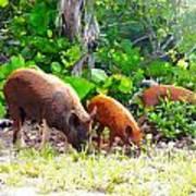 Three Pigs Poster