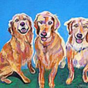 Three Playful Goldens Poster