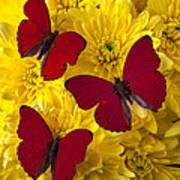 Three Red Butterflys Poster by Garry Gay
