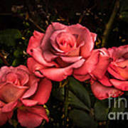 Three Roses Poster