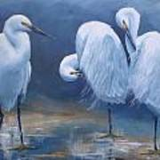 Three Snowy Egrets Poster