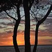 Three Trees At Sunset  Poster