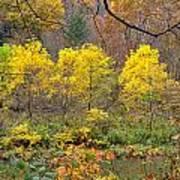 Three Yellow Trees Poster