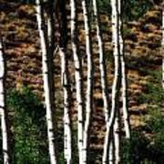 Through The Aspens Poster