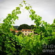 Through The Vines Poster by Lainie Wrightson