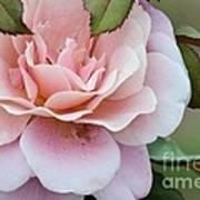 Tiara Pink Poster
