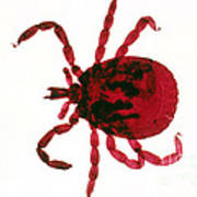 Tick Poster