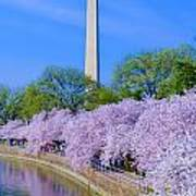 Tidal Basin And Washington Monument With Cherry Blossoms Vertical Poster