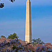 Tidal Basin Cherry Blossoms #2 Poster