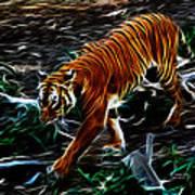 Tiger 4217 - F Poster