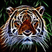 Tiger Abstact Art Poster