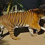 Tiger Beat Poster