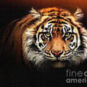 Tiger Bright Poster