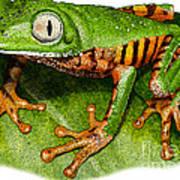 Tiger-legged Monkey Frog Poster
