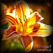 Tiger Lily Flower Poster