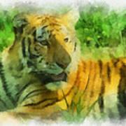 Tiger Resting Photo Art 01 Poster