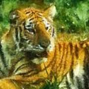 Tiger Resting Photo Art 02 Poster