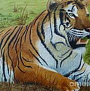 Tiger Tiger Poster