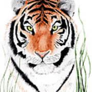 Tiger Tiger Where Poster
