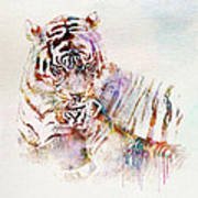 Tiger With Cub Watercolor Poster