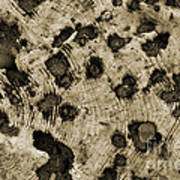 Time Holes - Sepia Tone - Wonderwood Collection - Olympic Peninsula Wa Poster