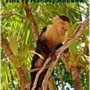 Time To Monkey Around Poster