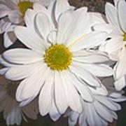 Timeless Sunshine Daisy Poster