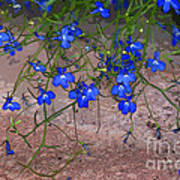 Tiny Blue Flowers Poster