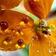 Tiny Dew Drop On Wild Flower Macro Poster