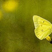 Tiny Green Dancer Poster