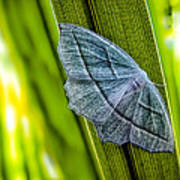 Tiny Moth On A Blade Of Grass Poster