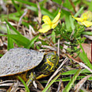 Tiny Turtle Close Up Poster