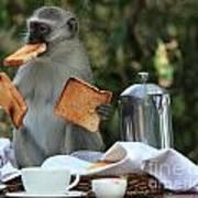 Toast Monkey Poster