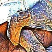 Tortoise Gouache Poster