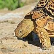 Tortoise Pose Poster