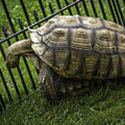 Tortoise Turtle Time Poster