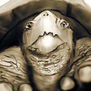 Tortuga Poster