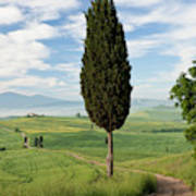Track, San Quirico D'orcia, Val Poster
