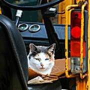 Tractor Cat Poster