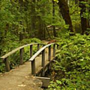 Trail Bridge Toketee 1 Poster