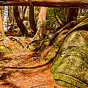 Trail In A Forest, Muskoka, Ontario Poster