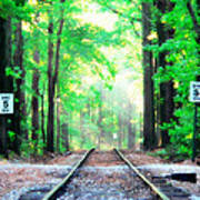 Train Tracks In Forest Poster