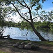Tranquil Lake Poster