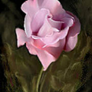 Tranquil Rose Poster