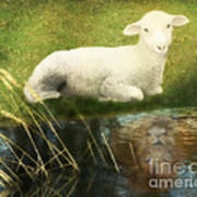 Transformation Lamb Or Lion Poster