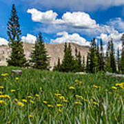 Trappers Lake Meadow Poster