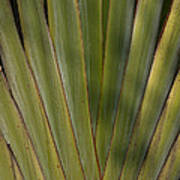 Traveller's Palm Patterns Dthb1542 Poster