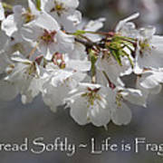 Tread Softly - Life Is Fragile Poster